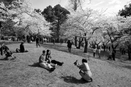 Cherry Blossom #08