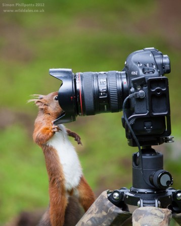 a squirrel looking inside a DSLR lens