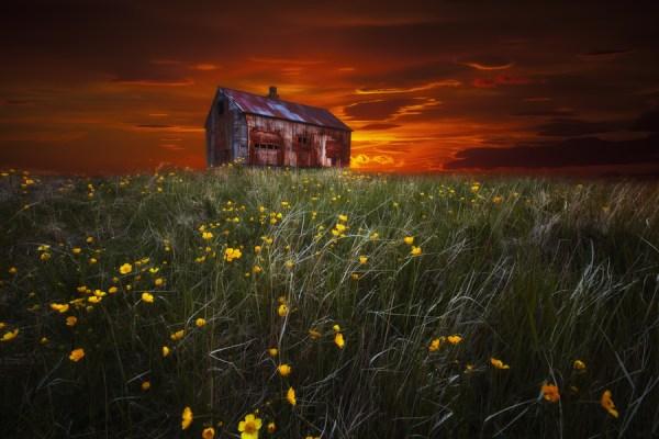 a rusty shack in a field