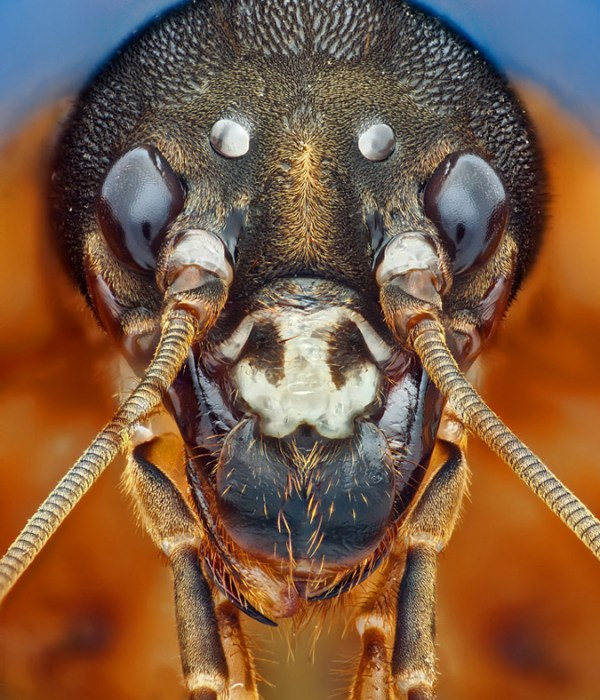 High magnification macro photograph of an insect head