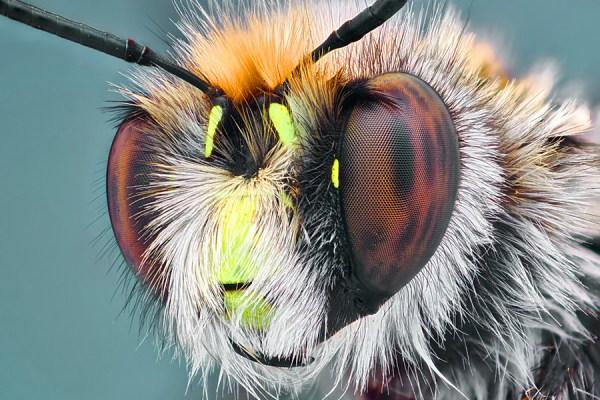 macro photograph of a bee