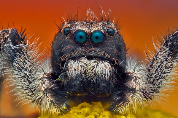 macro photograph of a jumping spider