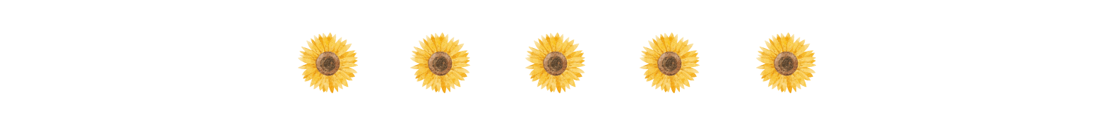 small, centered image of five sunflowers