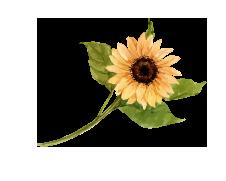 centered image break of a small sunflower