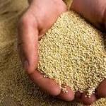キヌアの食べ方はそのままだと苦い!?炊き方は白米に混ぜるだけで超簡単!?