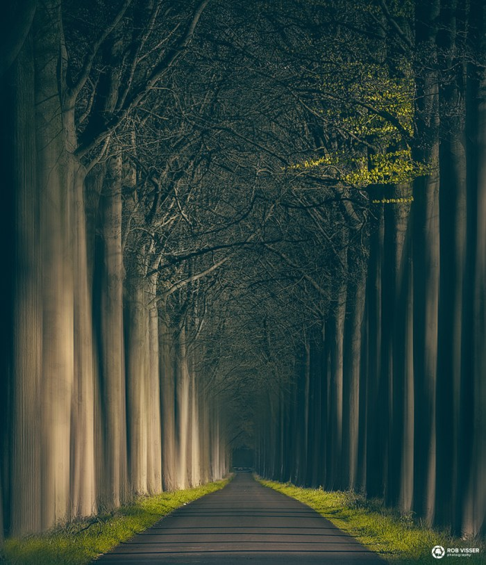 The horror road