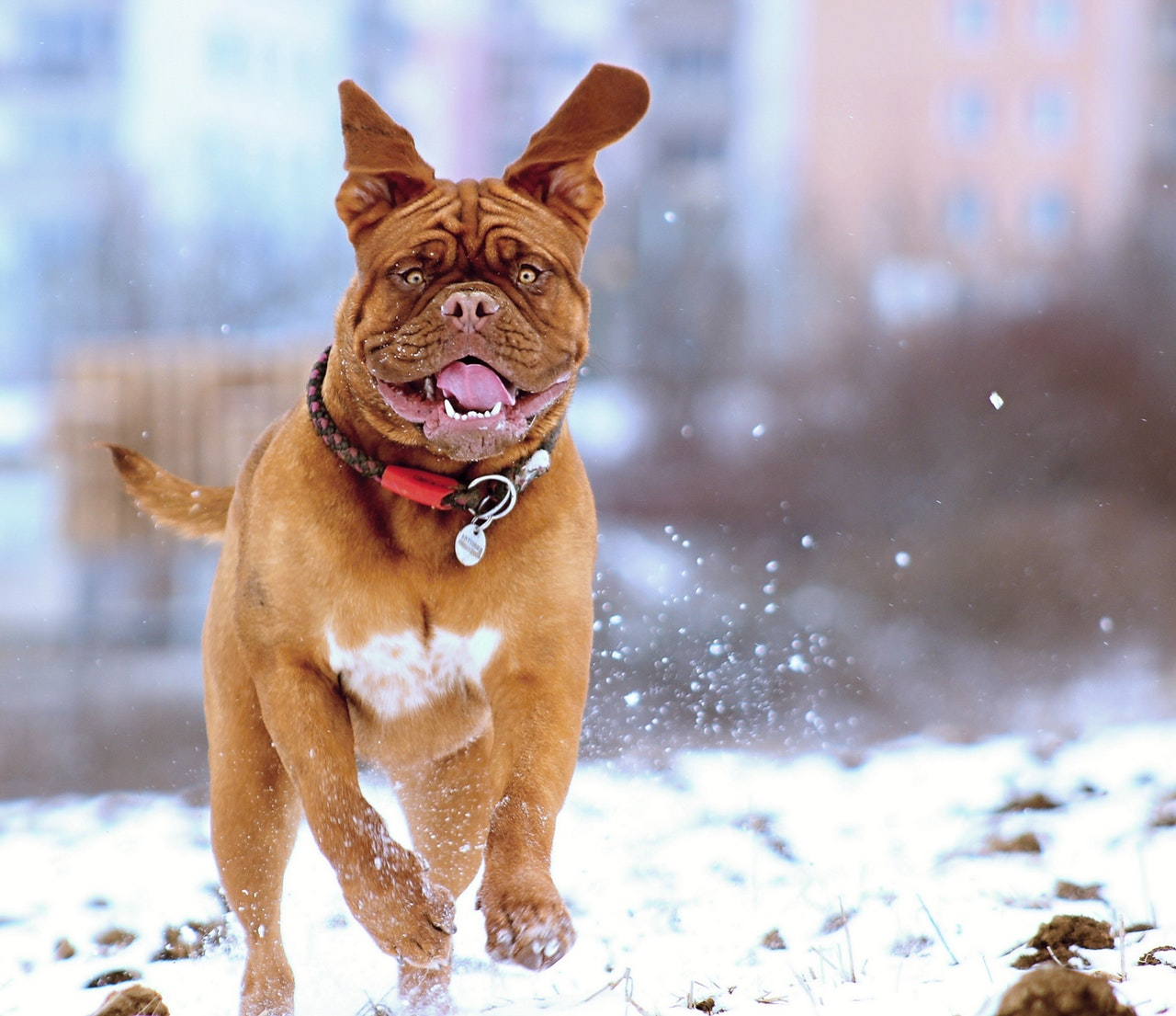 Photo of dog in the snow
