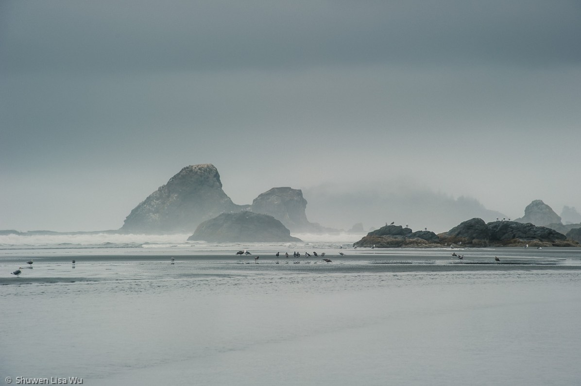 Photo of a foggy morning at Moonstone Beach, Trinidad