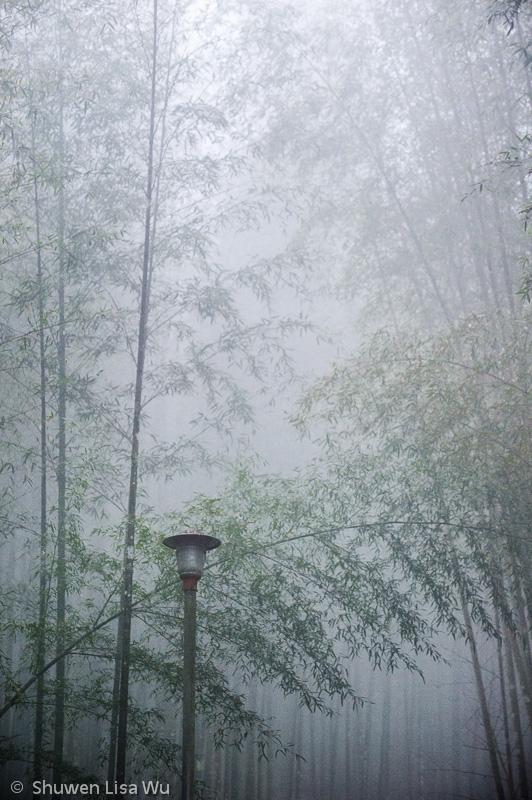 Bamboo Forest at Shan Lin Xi, Nantou County, Taiwan.
