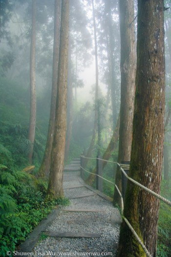 Foggy Trail, Shan Lin Xi, Nantou, Taiwan. March 2013.