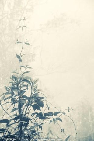 Tree Seedling in Fog