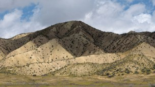 Pale hills with scattered sagebrush at Carrizo Plain, San Luis Obispo County, California, April 2016.