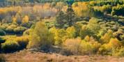 Fall Colors at Dunderberg Meadows, Lee Vining, California, September 2016.