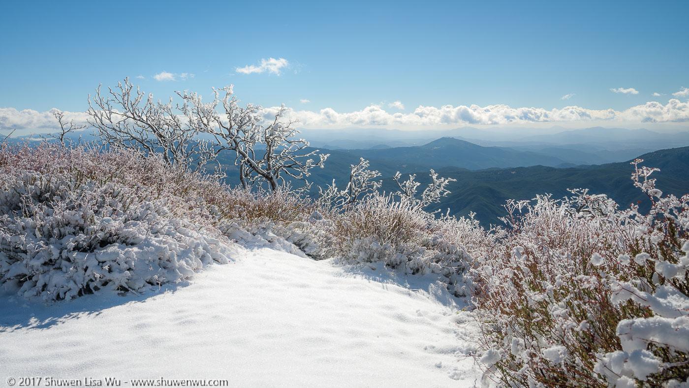 Iced vegetation and winter views along East Grade Road, Palomar Mountain, California. December 2016.
