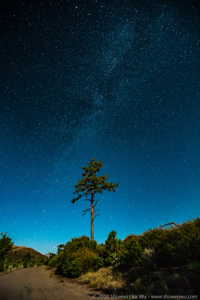 Jeffrey Pine and Milky Way during a Moonlight Night at Mt. Laguna