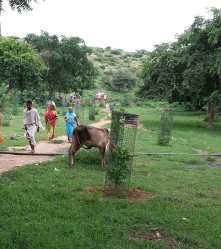 Pilgrims and bull in the Shyam Forest