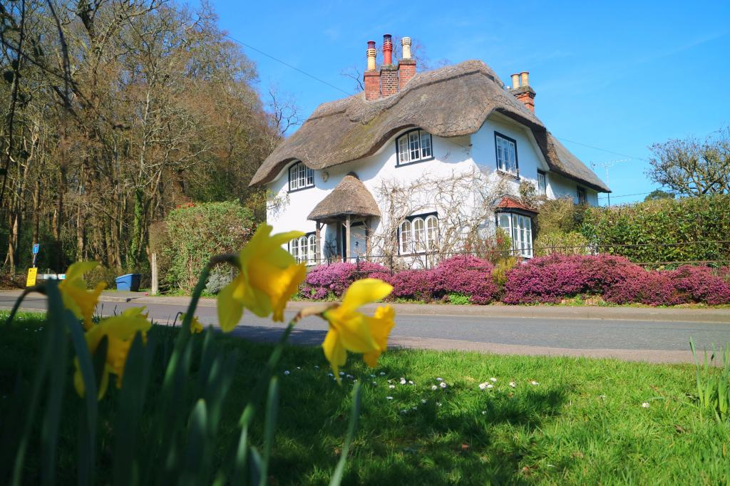 Thatched cottage in The New Forest