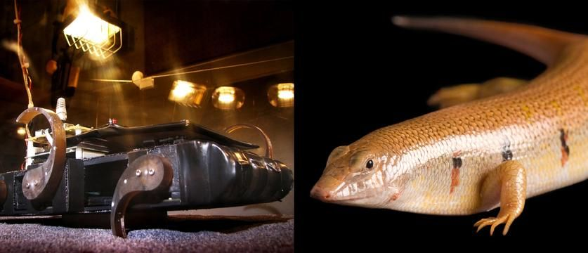 The 'Sandbot,' a scaled-down version of an all-terrain RHex robot, seeks to whip its curved legs through porous surfaces in the mode of a sandfish lizard.