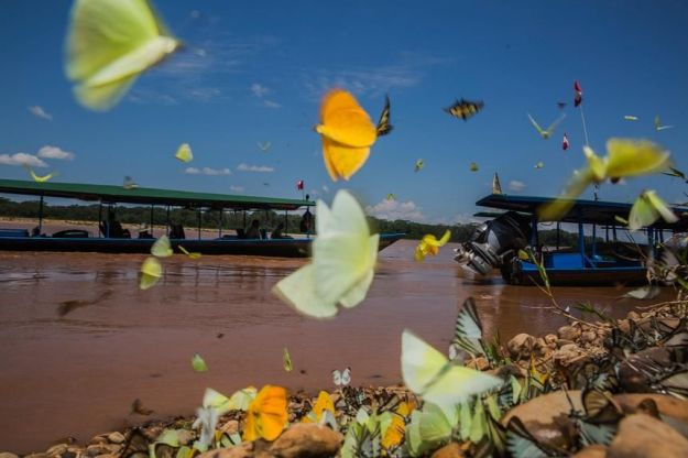Butterflies by the Tambopata River.