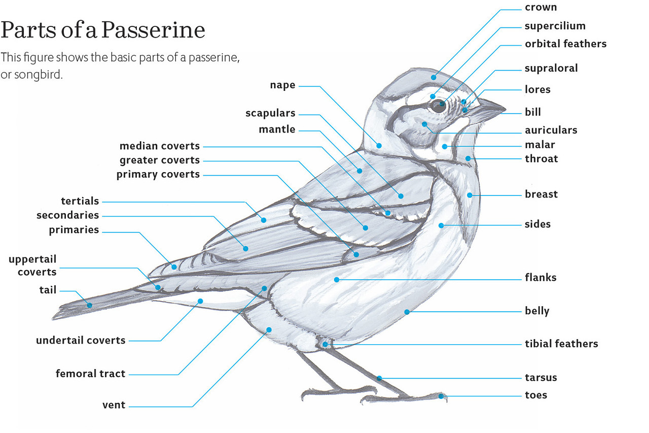 Images About Bird Identification Information On