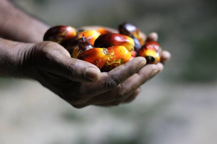 Palm fruit is the basis of a $30 billion global industry, with palm oil the most-consumed vegetable oil in the world.