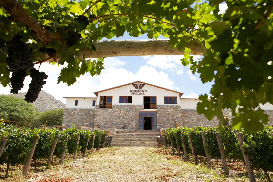 Other wineries in Cafayate worth a visit include Piattelli Vineyards, Finca Quara, and Bodega Domingo Molina (pictured).