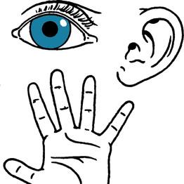 el neuro-mito de la modalidad sensorial de aprendizaje