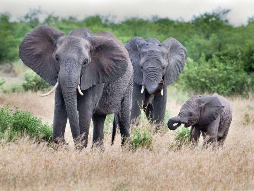جنوب افريقيا - دول العالم الاكثر جمالا