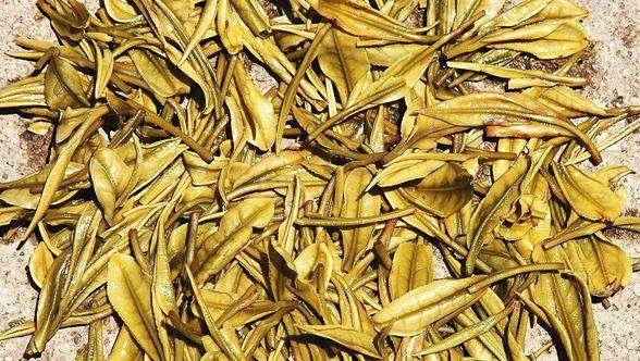 Anjhi Bai Cha Grüner Tee: nasse Teeblätter nach dem Aufguss
