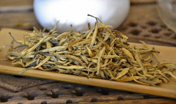 Frühlingspflückung der reinen Knospen von wilden, alten Teebäumen in über 2000m Höhe