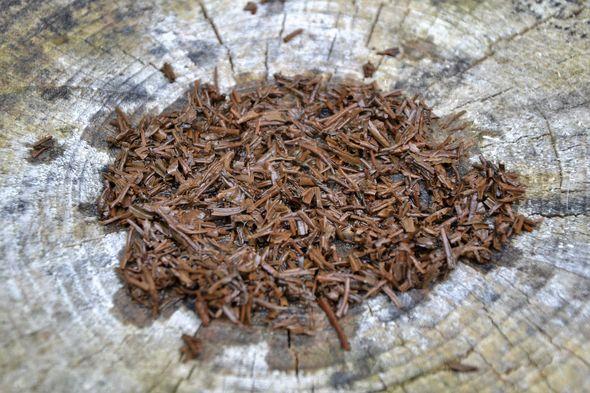 Spring Keemun Schwarzer Tee aus Qihong Town, Qimen County, Provinz Anhui China