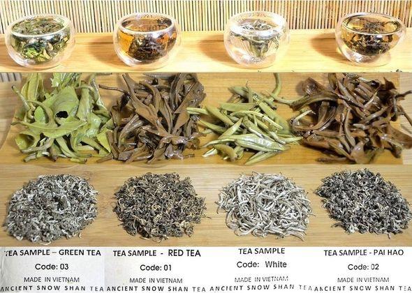 Vier Ancient Snow Shan Tees: grüner Tee, schwarzer Tee, Tra Pai Hao und White Snow Shan Silver Needle