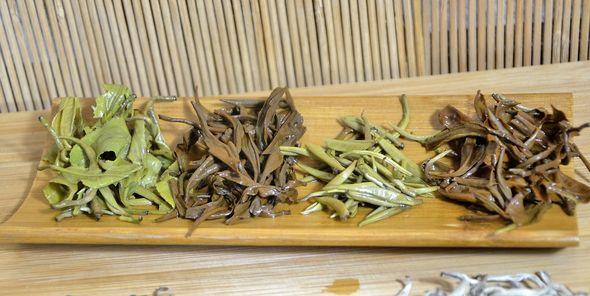 Vier Ancient Snow Shan Tees: grüner Tee, schwarzer Tee, Tra Pai Hao und White Snow Shan Silver Needle: nasse Teeblätter nach der Infusion