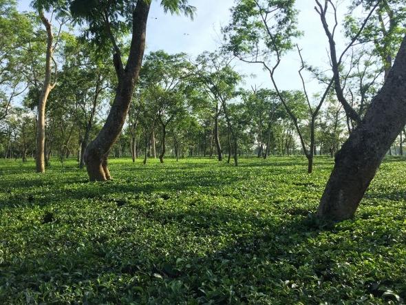 Doke Teegarten, Bihar, Indien