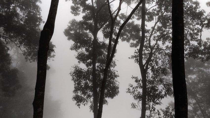 Nebelwald auf dem Bolaven Plateau in Laos