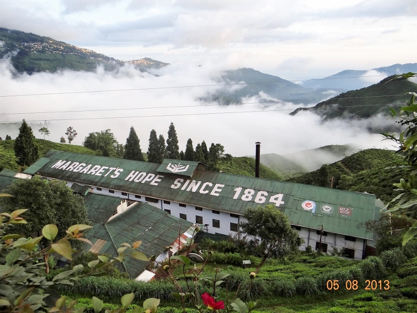 Margaret's Hope Tee-Estate, nördliches Kurseong Valley, Darjeeling, Indien