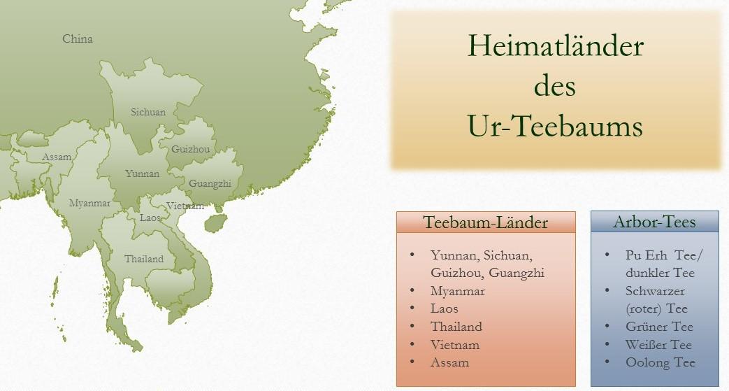 Heimatländer des Ur-Teebaums