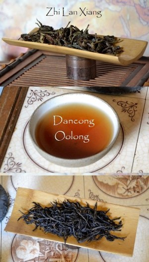 Zhi Lan Xiang Dancong Oolong Tee, Fenghuang Shan (Phoenix) Mountain, Chaozhou, Guangdong, China