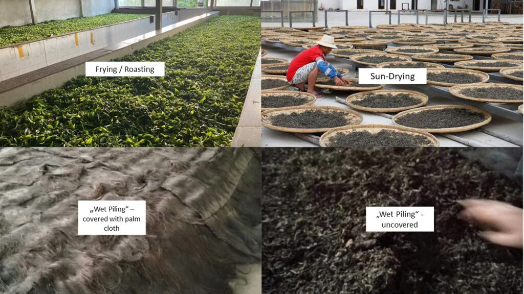Pu Erh Tea - Processing