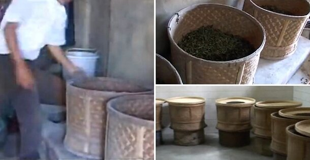 multiple roasting of tea leaves in bamboo devices over chacoal fire