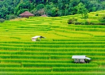 Les Exportations de Riz au Plus Haut en 2017