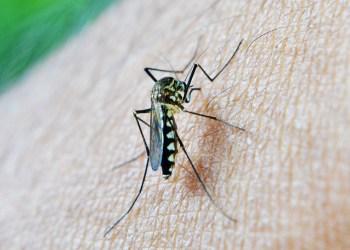 Comment se protéger contre les moustiques en Thaïlande ?
