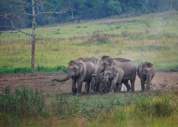 La Thaïlande envisage de lever l'interdiction d'exporter des éléphants après un moratoire de 10 ans