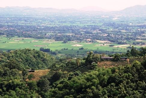Tea garden with panoramic view in Ban Sie Phan Rai on Doi Tung, North Thailand