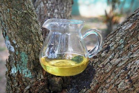 Green Tie Guan Yin Oolong tea from Anxi, Fujian: garden tree Gong Fu Cha
