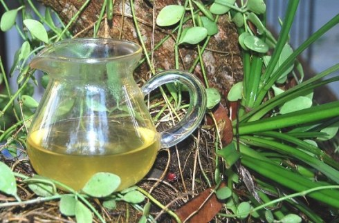 The green color of Wild Spring Long Jing Tea