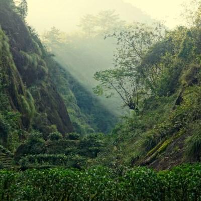 Rock tea garden in Wuyishan's Zheng Shan area