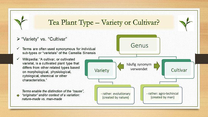 "Tea plant types - ""variety"" vs. ""cultivar"""
