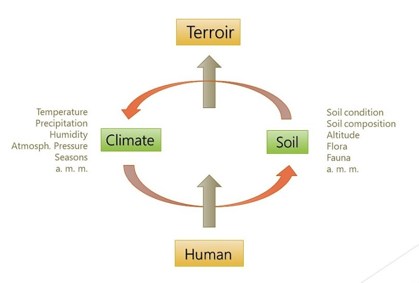 Terroir is the interaction of climate and soil under given under human interference, if any