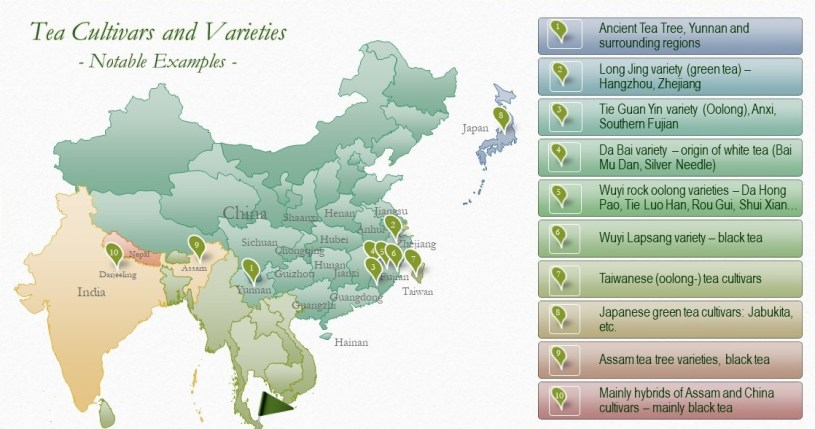 Tea Cultivars and Varieties - Notable examples